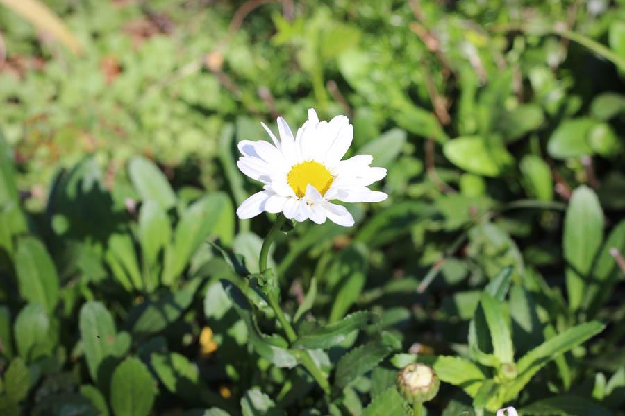 Springtime garden prep kristinesser.com