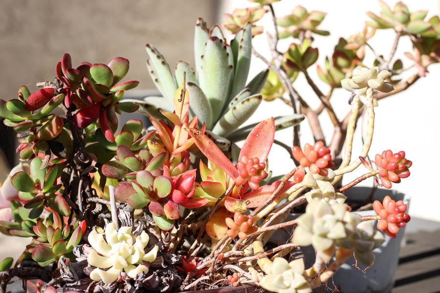 Succulent gardening in spring kristinesser.com